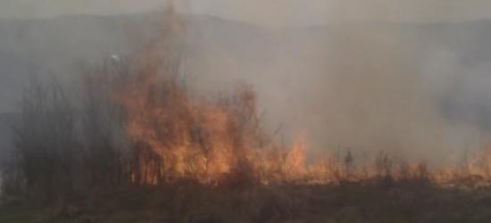 Paliły się łąki w Zagórzu. Ogień był blisko lasu (FILM, ZDJĘCIA)