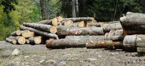 ZAGÓRZ24.PL: Przetarg ofertowy na sprzedaż drewna wielkowymiarowego